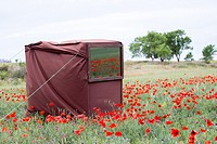 Europe, Spain, Catalonia, Province of Lerida, Photo shooting in a field of poppies.