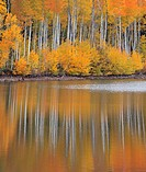 Fall colors from Aspen trees are reflected in the still waters of Kolob Reservoir near Zion National Park, Utah.