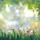 Beauty summer day, abstract rural landscape with blooming flowers and green grass.