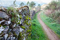 Villuercas geopark trail, Caceres, Extremadura, Spain. Old stone wall full of moss.