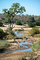 River scene, Kruger National Park, Transvaal, South Africa.