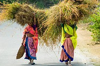Two rural women share a load of fodder, Rajasthan, India.