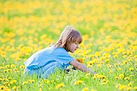 Boy with Long Blond Hair Picking Dandelions in a Spring Field.