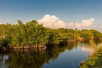 Canal along Route 41 in Big Cypress National Preserve in Southwest Flotida with big white clouds in distance.