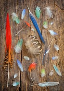 Collection of different color feathers on old wooden table.