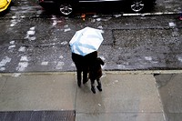New York City, Manhattan. Man and Woman Standing Under an Umbrella on a RAiny Day, Trying to Hail a Taxi Cab.