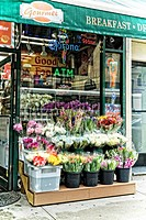 New York City, Manhattan. Pots of Fresh Flowers Displayed and For Sale in Front of a Local Grocery Store.