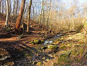A stream and forest in winter, Pennsylvania, USA.