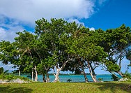 Trees overlooking the sea, Shefa Province, Efate island, Vanuatu.