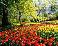 Keukenhof Gardens. Holland