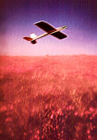 Toy plane flying over a poppy field
