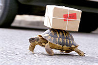 Turtle courier