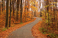 County road in autumn. Turkey Run State Park. Indiana. USA