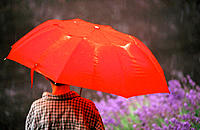 Bob under red umbrella in rain