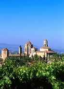 Vineyards, Poblet monastery. Tarragona province. Spain