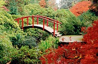 Red Moon Bridge among rhododendrons and Japanese maple. Kubota, Seattle. Washington. USA