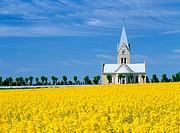 Church behind a rapefield. Skane. Sweden