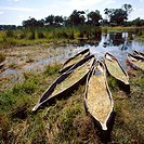 Traditional canoes in Okavango Delta. Botswana