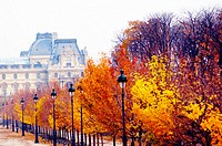 Trees in fall in Tuileries gardens. Paris. France