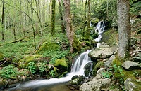 Waterfalls in Tremont Area. Great Smoky Mountains National Park. Tennessee, USA