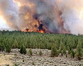 Forest fire in Deschutes National Forest. Central Oregon. USA