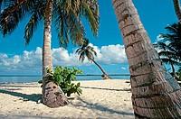 Tropical beach and palm trees. Bay islands. Caribbean. Honduras