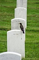 Bird with worm on grave.