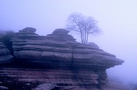 Tree growing on limestone rock formation in foggy morning. Torcal de Antequera Natural Park, Málaga province, Spain.