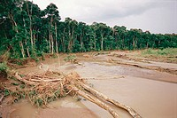 Flooding and forest degradation. New Britain. Papua New Guinea.