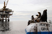 Sea lions on oil rig buoy.