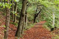 Forest path, Höllental, Frankenwald, Franconia, Germany