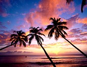 Palms at sunset in King´s Beach. West Coast, Barbados, West Indies