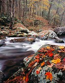 Autumn, Tremont, Great Smoky Mountains National Park. Tennessee, USA