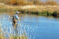 Man fly fishing. Silver Creek, Idaho. USA
