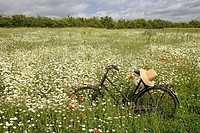 Wild flower meadow with ancient bicycle.