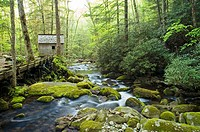 Reagan Tub Mill on Roaring Fork, Great Smoky Mtns National Park, TN