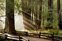 Muir Woods National Monument. California. USA