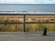 Dog, beach