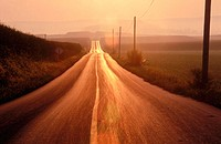 Road, straight with telephone poles and wires with an orangish cast of the sun with mist