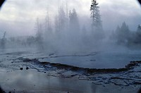 Misty geyser and trees, Yellowstone NP, USA