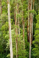 Australian forest