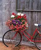 Bicycle with flower leaning against garden shed. Anacortes. Fidalgo Island, Skagit County. Washington. USA.