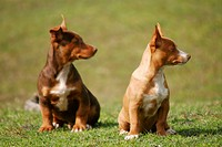 Puppies sitting