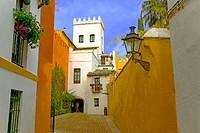 Street in Santa Cruz quarter, Sevilla. Andalusia, Spain