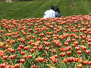 Two young people on tulip field