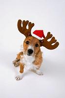 Dog wearing reindeer antlers and christmas hat