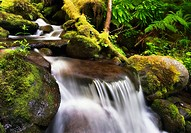 Stream detail in a rainforest in the Columbia River Gorge, Oregon