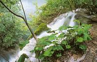 Lush vegetation is abundant as are waterfalls in the Plitvice Lakes National Park. Croatia