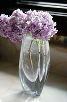 Lilacs in a glass vase on a kitchen counter, sunlit, stems and water drops on stems showing