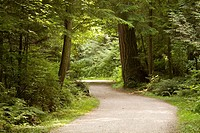 Path in Stanley Park, Vancouver, BC, Canada